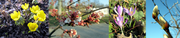 Kopfbild: Botanischer Garten Kassel - Frühlingsboten im März